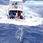 Tips For Choosing A Deep Sea Fishing Charter Boat