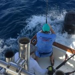 The striped marlin fishing continues to be quite good in Galapagos