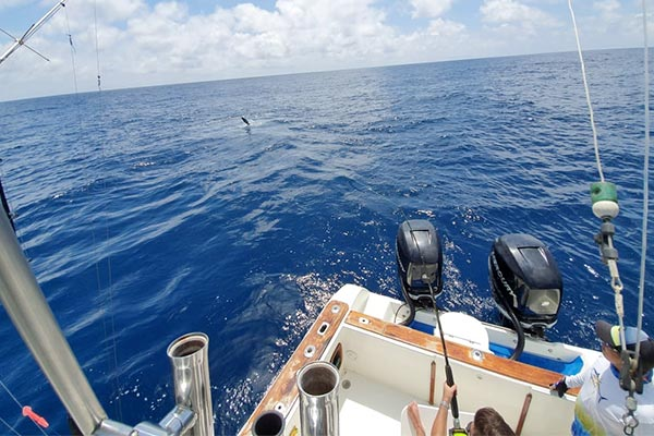 ecuagringo marlin fishing report 20200108 04