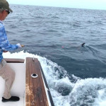 Striped & Blue Marlin On Fly Frenzy