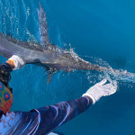 Dozens Of Marlin Shots Per Day Possible!