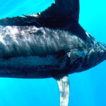 Common Misconceptions About Fishing The Galapagos Islands