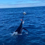 Santa Cruz Island, Galapagos Last Minute Incredible Special October 2021
