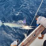 Galapagos Shared Boat Fishing Opportunity November 2021